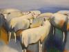 schapen-hetty-bunschoten