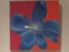 bloemen-3-luik-hetty-bunschoten